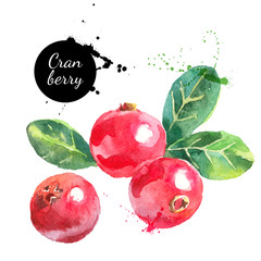 Hand drawn watercolor cranberry painting on white background