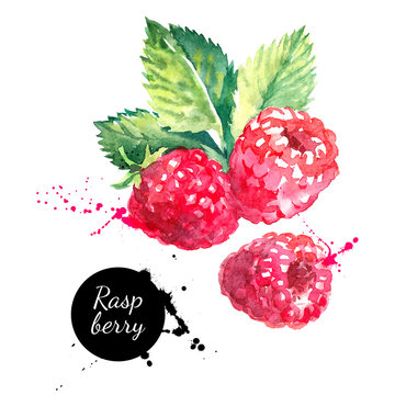 Hand drawn watercolor painting raspberry on white background