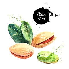 Hand drawn watercolor painting nut on white background