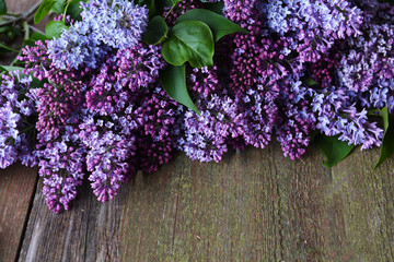 Wall Murals Lilac branch of lilac