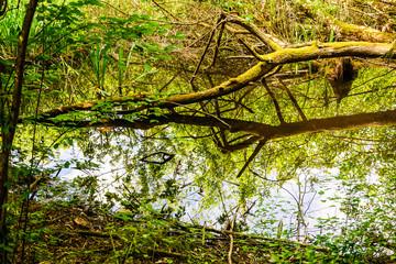 Baum spiegelt im Wasser