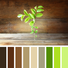 plant grows in old wood crack with palette color swatches