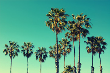 Fotorolgordijn Palm boom Palm trees at Santa Monica beach. Vintage post processed. Fashion, travel, summer, vacation and tropical beach concept.