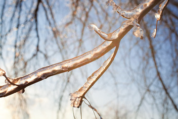 Bare tree branches with ice