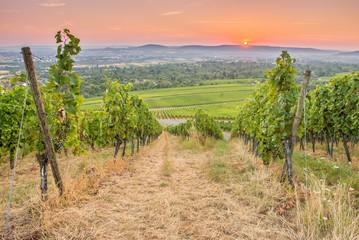 Fototapete - Sonnenaufgang am Horizont im Weinberg