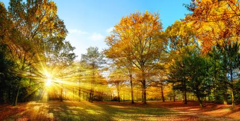 Wall Mural - Idyllischer Naturpark im Herbst bei Sonnenschein