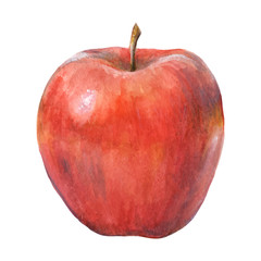 Watercolor apple 2. Vector illustration