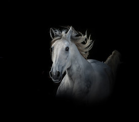 Wall Mural - White horse run in dark