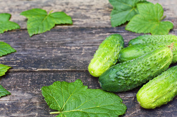 Group of fresh cucumbers and currant leaves on wooden boards