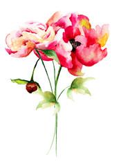 Beautiful Peony flowers