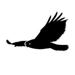 Hawk or eagle silhouette flat icon for nature apps and websites