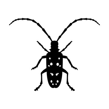 Asian Longhorned Beetle insect flat icon for nature apps and websites