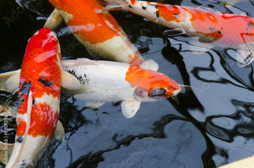 koi carp fisch stockfotos und lizenzfreie bilder auf bild 89093367. Black Bedroom Furniture Sets. Home Design Ideas