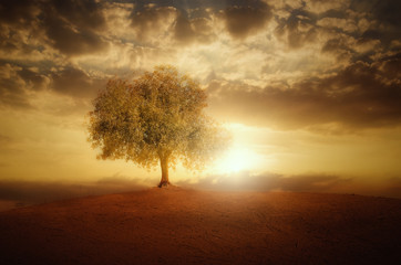 Foto op Aluminium Bruin Single Tree at sunset