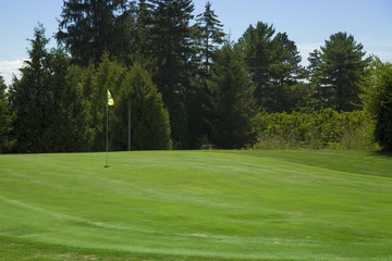 green on golf course
