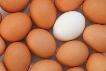 Chicken egg background full frame. Background of fresh eggs. Brown and white eggs.