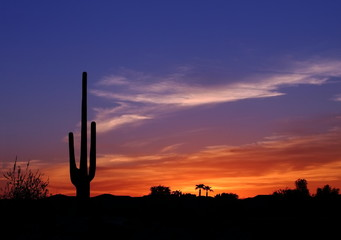 Beautiful colorful  sunset in the Arizona desert with Silhouette of Cactus and palm trees off in the distance