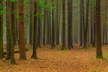 Photo of the autumn coniferous forest