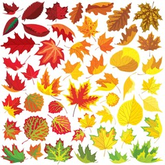 50 autumn leaves collection, vector illustration