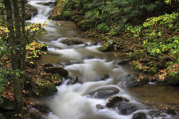 Beautiful Stream in the Forest during the Fall Season
