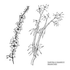 Hand drawn vector set of sakura and bamboo branches.