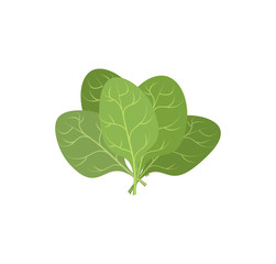 Spinach leaves on a white background. A bunch of green plants. V