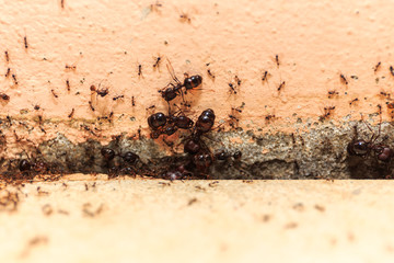 Beware crowd big ant,  they lived in the home