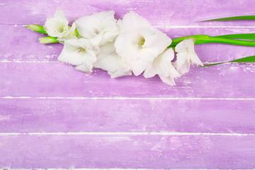 Gladiolus flower on wooden background