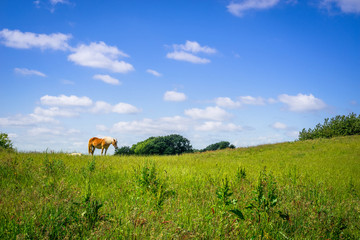 Horse standing on a green field