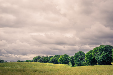 Field landscape with cloudy weater