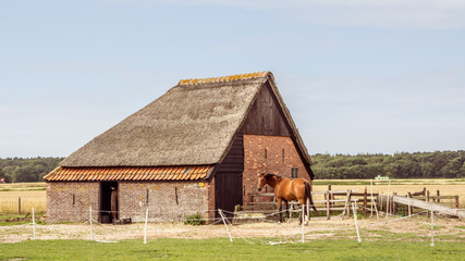 Sheep barn on the waden sialnd Texel in the Netherlands