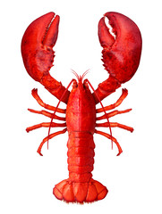 Lobster Isolated