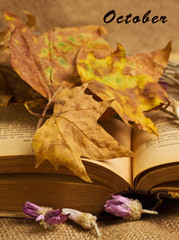 Opened book with maple leaves and everlasting flowers