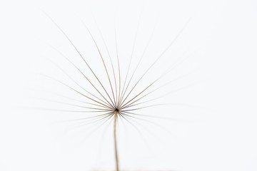 Minimalist photo of dandelion, view to the top, floral artistic photo, summer background, minimalism