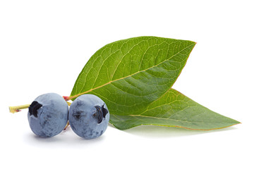 Blueberry fruit with leaf