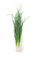 Fototapeta Fresh garden herbs. Spring onion obraz