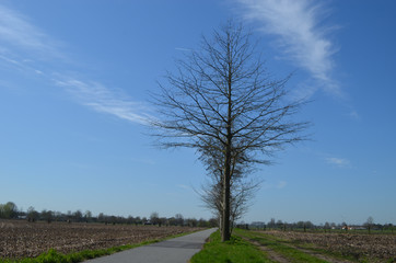 small path between meadow in flanders