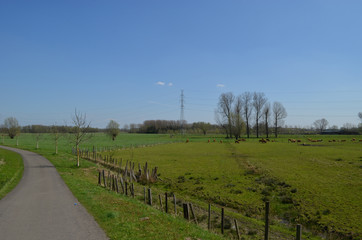 Bicycle trail through rural landscape with brown cows