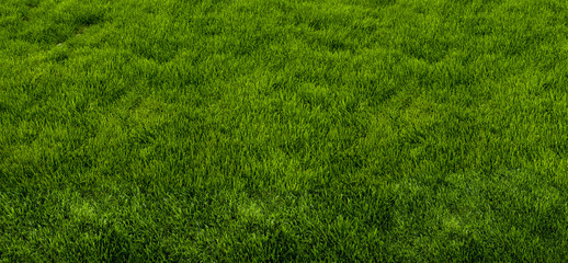 Green grass texture from a park