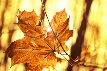 dry autumn leaf stuck in forest