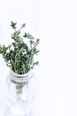 Herbs in bottles on rustic white background