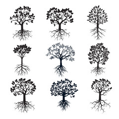Set of Trees and Roots