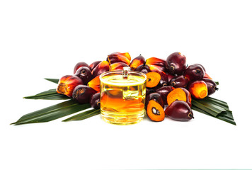 Oil plam fruit with oil on white background