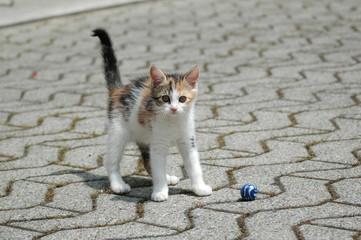 Cucciolo di gatto che gioca con la palla