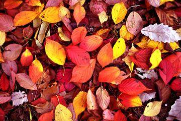 가을풍경 & 가을단풍 이미지