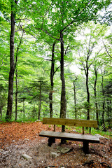 Hiking trail with bench