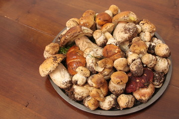 Plate with dozens on fresh Porcini mushrooms just collected in the forest