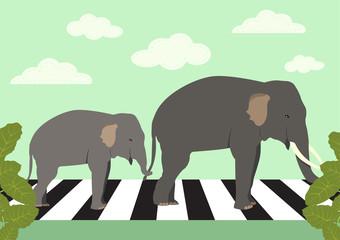 elephants crossing zebra crossing, vector illustration