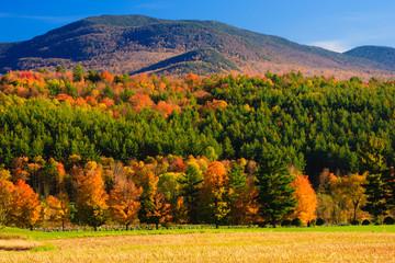 Maple trees on a hillside in Vermont during peak foliage season.
