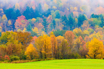 Maple trees on a hillside in Vermont during peak foliage season.